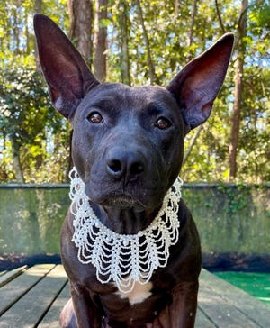 Diamond, a 2-year-old mixed-breed dog, is the pet of the week | PAWS
