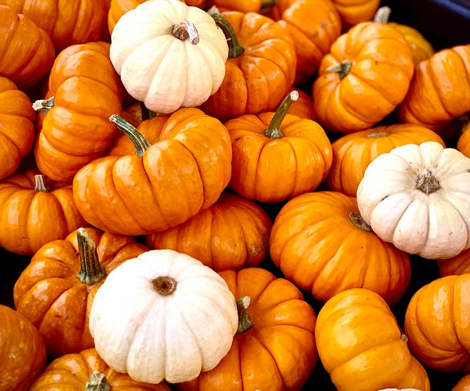 The Somersworth Pumpkin Festival will take place Saturday, Oct. 9.