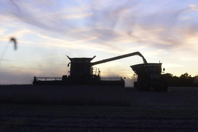 A pair of farmers harvest beans at dusk Thursday evening north of Galion.