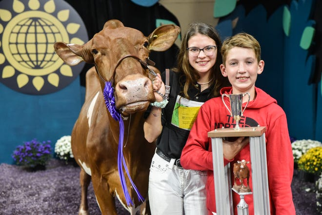 2018 Grand Champion, Maple Fudge Of 12 Oaks, owned by Colton and Ashley Brandel of Lake Mills, Wisconsin, made her return to World Dairy Expo in spectacular fashion. Claiming Senior and Grand Champion titles in the 2021 International Milking Shorthorn Show.