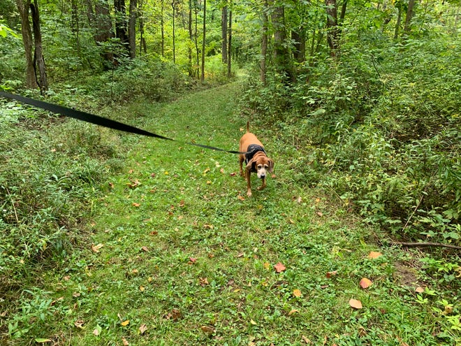 Helen's Way is the newest addition to Victor Hiking Trails.