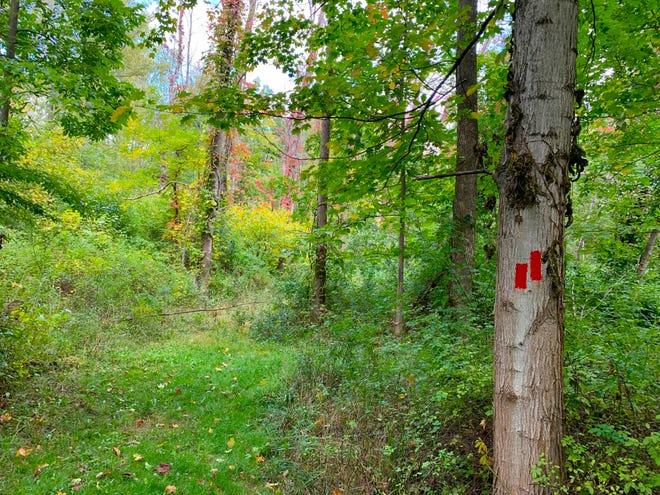 Helen's Way is a trail blazed in red.