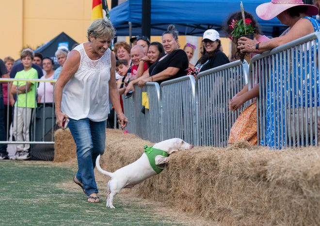 The City of Port St. Lucie held wiener dog races as part of its annual Oktoberfest celebration on Saturday, Oct. 2, 2021, at the MIDFLORIDA Credit Union Event Center in Port St. Lucie.