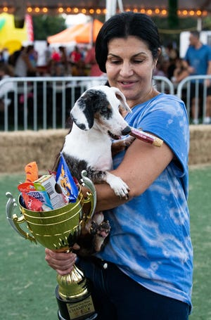 """""""I'm addicted to wiener dog racing,"""" said Tracey Vonella, of Fort Lauderdale, who watches as her double dapple dachshund, Jeb, steals a treat out of his first prize cup after the wiener dog races at the City of Port St. Lucie's annual Oktoberfest celebration on Saturday, Oct. 2, 2021, at the MIDFLORIDA Credit Union Event Center in Port St. Lucie. Jeb is deaf and beat out 34 other dogs to win the title."""