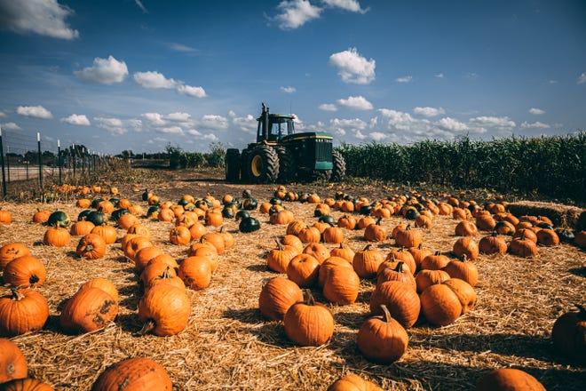 Oklahoma Heritage Farm Pumpkin Patch