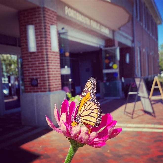 A monarch butterfly lands at the entrance to Portsmouth Public Library.