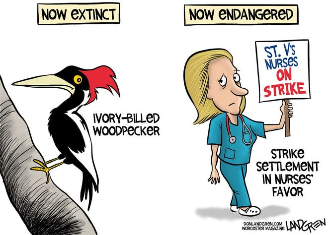 The ivory-billed woodpecker has been declared extinct, and the Saint Vincent's nurses strike settlement may find itself on the endangered list.