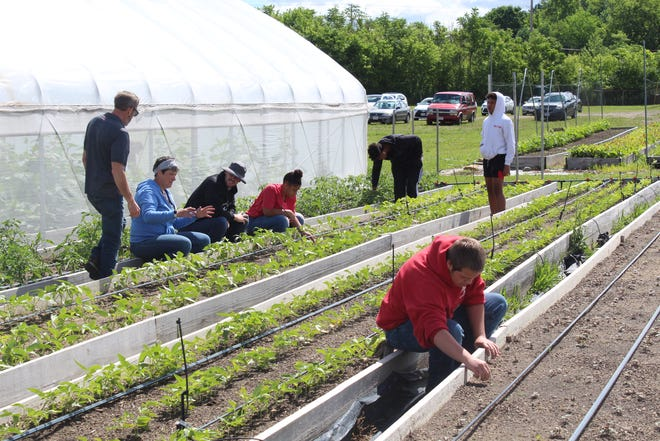 The microfarm at Ohio State University Mansfield has grown almost 10 tons of produce including kale, spinach and various types of peppers. Now, Marion Leadership looks to bring this project to Marion.