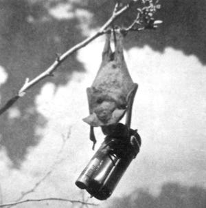 Bats from Carlsbad Caverns National Park that were turned into bat bombs almost helped the U.S. Marine Corp in fighting World War II.