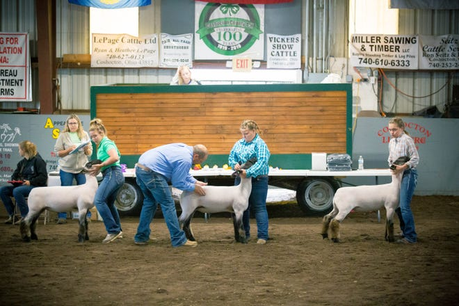 Judge Matt Martin examines market lambs Tuesday morning during the 170th annual Coshocton County Fair.