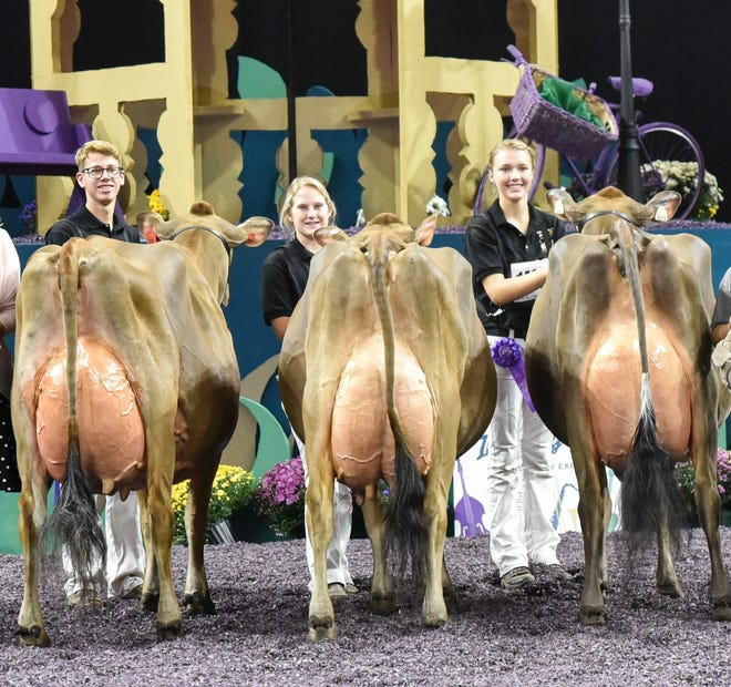 A Senior Three-Year-Olds Homeridge T Annette of Watertown and Meadowridge Triple Crown Fae of Cumberland, Wis., had a one, two finish at the International Junior Jersey Show at World Dairy Expo.