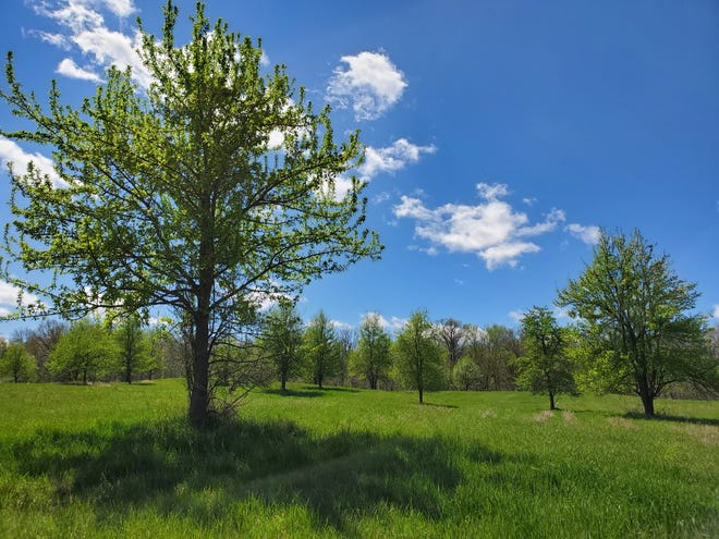 Nonnative pear trees, which do not benefit grassland wildlife, have invaded the grasslands in the Somerset State Game Area and will be removed as part of a project coordinated by the Lenawee Conservation District through a Michigan Department of Natural Resources grant.