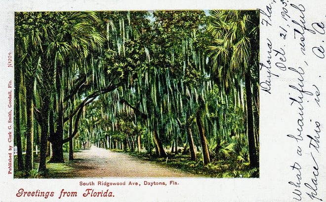 Besides being a developer, land speculator and local politico, Daytona Beach Mayor Clark G. Smith was a photographer who published postcards. Here is one of his shots of a tree-lined South Ridgewood Avenue from around 1905.