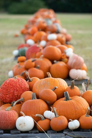 Pumpkin patches around the state are busy selling Texas-grown pumpkins.