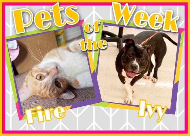 Pets of the Week: Fire and Ivy
