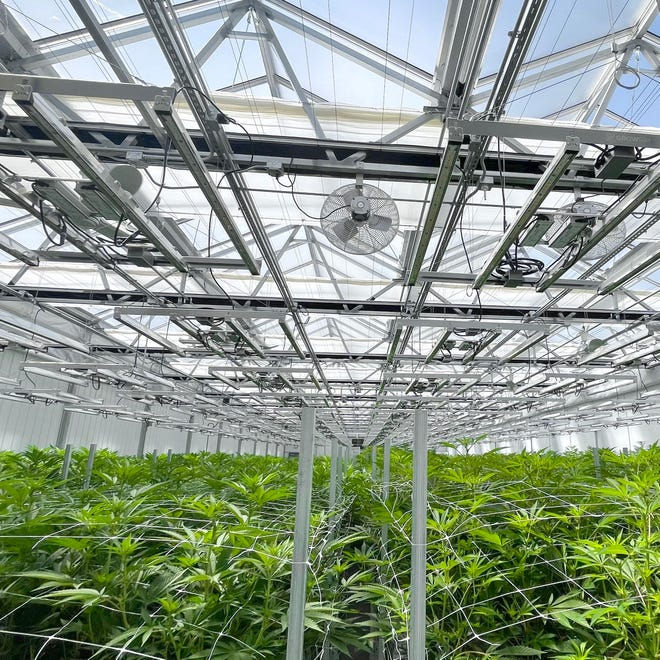 The Office of Community Outreach at Spoon River College has scheduled cannabis industry workshops at all four Spoon River College locations, and they are ideal for those looking to increase their general knowledge about this ancient plant. Pictured is one of the greenhouses at Nature's Grace and Wellness, LLC, located in Vermont, IL.