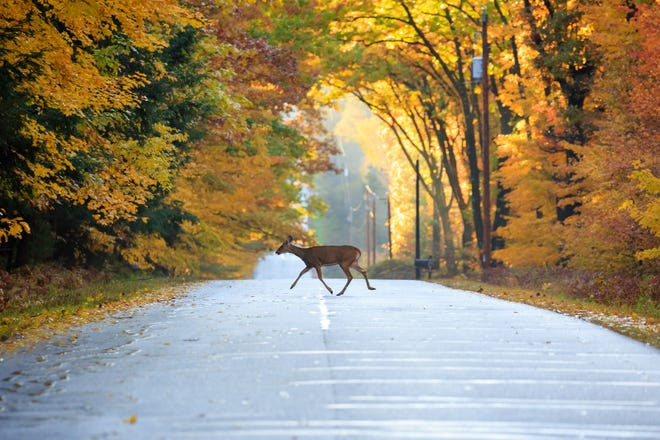 According to the Missouri State Highway Patrol, there were 3,639 traffic crashes involving deer in 2020.