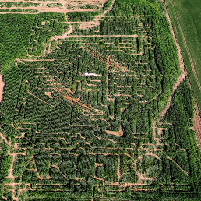 """Tarleton State University is the 2021 Lone Star Family Farm Corn Maze sponsor. """"Go, Texans!"""" is the theme and the design features the #TarletonState logo."""