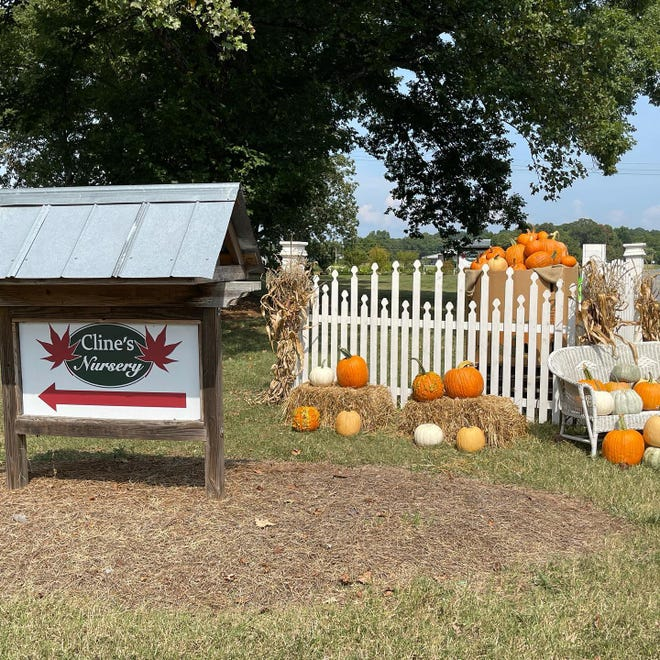 Cline Nursery is inviting you and your little ones to their pumpkin painting session Saturday morning.