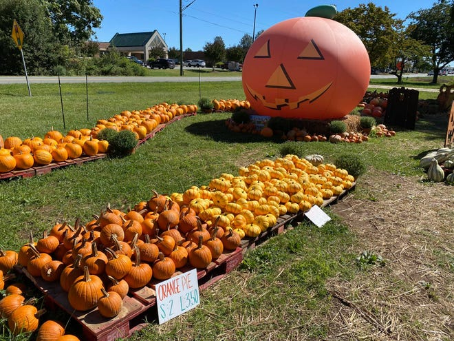 Sophia's Pumpkin Patch has a variety of pumpkins for sale for Halloween and fall decoration.