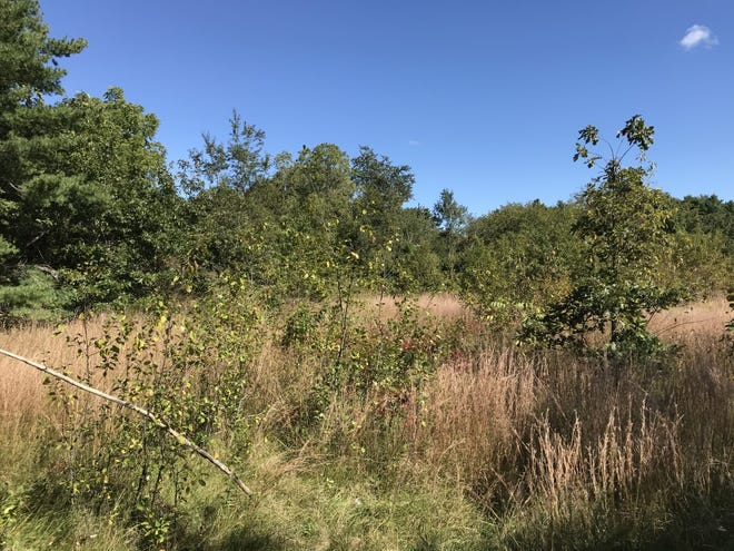 This undeveloped parcel near Union Street was purchased by Weymouth from Ryder Development Corp. and might eventually have a walking trail that leads to Union Point.