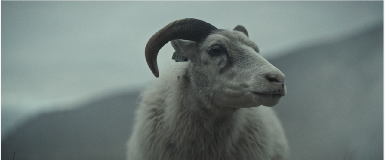 Noomi Rapace delivered real baby lambs for bonkers  Lamb  fable about a sheep girl