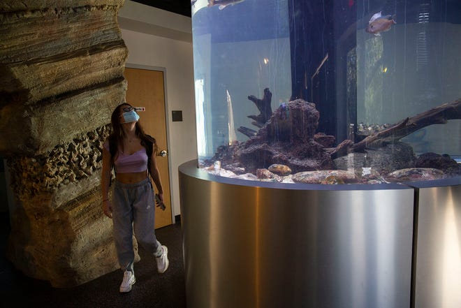 Abby Najera looks at an aquarium in Discovery Hall at the Meadows Center for Water and the Environment at Texas State University on Thursday. The university's fundraising campaign will pay for renovation of the center.