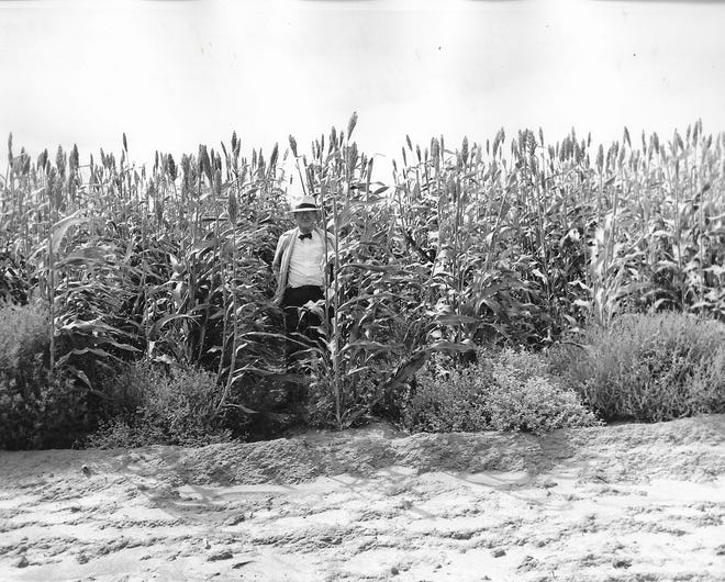 A mile field in Ulysses in 1946.