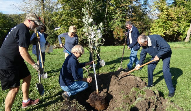 Members of the Bucyrus City Tree Board and descendants of town founders Samuel and Mary Norton team up to plant a Regal Prince Oak tree in memory of the Nortons' oldest daughter, Louisa, in Aumiller Park on Friday as part of the city's Arbor Day celebration. From left are Jeff Panovich, Mary Lee Minor, Valerie Spreng (holding tree), Verna Schiffer, Mickey Kent (behind tree), Brad Van Voorhis and Denny Norton.