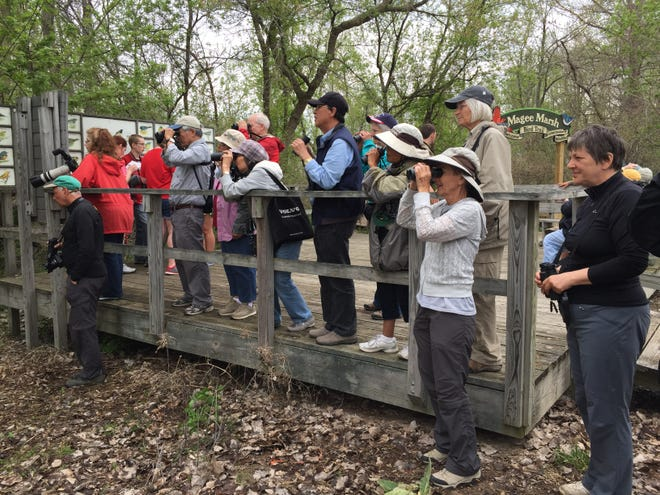 U.S. Senator Sherrod Brown, D-OH, has announced that the U.S. National Park Service's Land and Water Conservation Fund has awarded a $1,160,106 grant for new development and renovation activities at Magee Marsh Wildlife Area,  pictured here, a popular birding spot in Ottawa County.