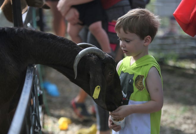 Elijah Haney feeds a goat Saturday afternoon during Topeka Fall Fest at the Vinewood.