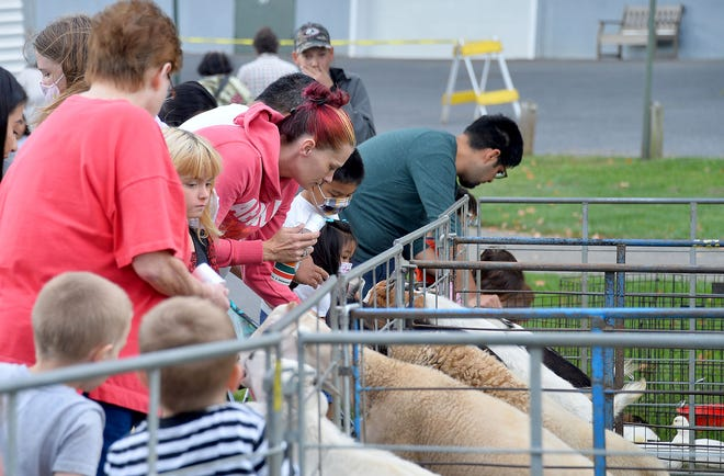 Families feed goats during Saturday's 19th annual Harvest Hoedown at Fairgrounds Park in Hagerstown.