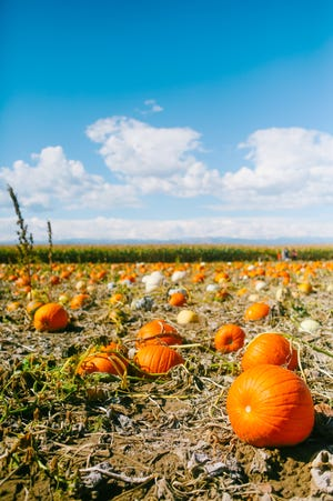 It's time for all things pumpkin in Onslow.