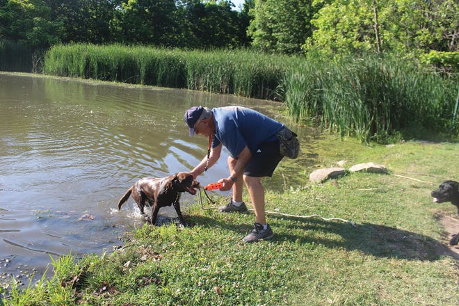 Waterfowl hunter Joe Kramer, Pratt, works with his labrador retriever Norma in preparation for duck hunting season. There are many waterfowl hunting enthusiasts in the state of Kansas.