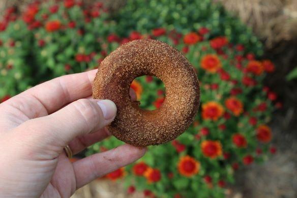 Donut de calabaza y especias de Mapleville Farm.