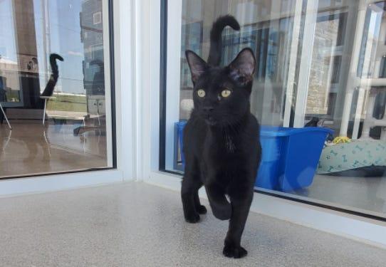 Elvis is the Wellington Humane Society Pet of the Week