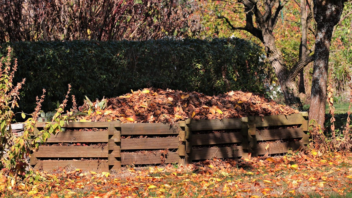 Gardening: Compost can help improve soil by adding organic matter