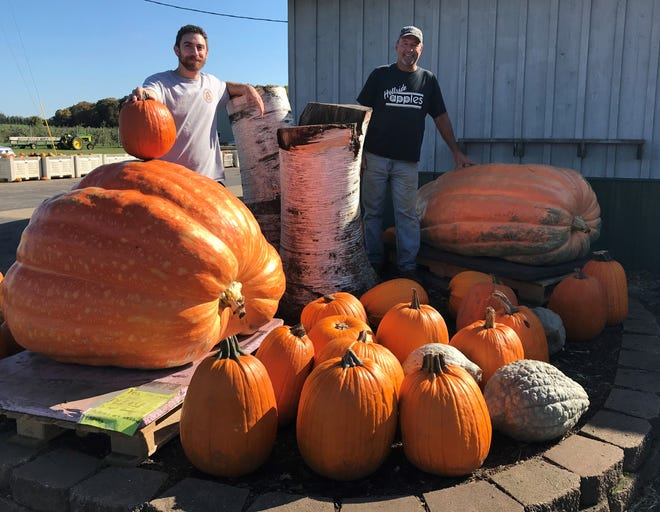 """Matt Fay, left, and Bill Roethle with their more than 870-pound pumpkins on display outside Roethle's Hillside Apples in Casco, along with a few """"regular"""" pumpkins for comparison. They're entering the behemoths in the giant pumpkin contest at Mishicot Pumpkinfest on Oct. 16."""