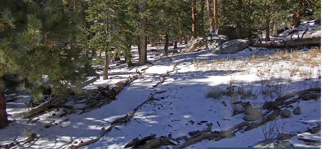 A screenshot of the Palm Springs Aerial Tramway's Long Valley cam showing snow at the top of Mount San Jacinto on Tuesday, Oct. 12, 2021.