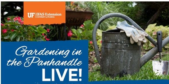 Florida is a welcoming climate for many invasive plants. Gardeners can help stop their spread, which is why the next edition of a virtual gardening series is dedicated to invasive species.