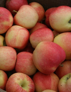 Rhode Island farmers say this summer's rainy weather has been great for apple trees.