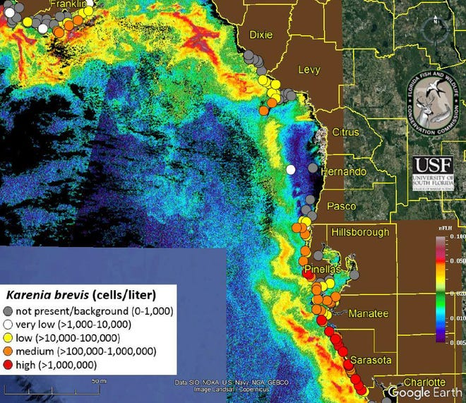 Steady intensification of Red tide in Sarasota and Manatee counties continues, according to the latest sample data from the Florida Fish and Wildlife Conservation Commission.