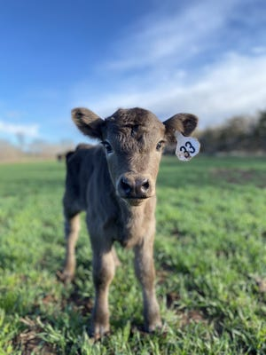Caldwell's Emma Rohrbaugh photo in RTK Photography Contest