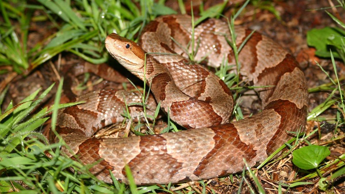 Word from the Smokies: 4 new snakes discovered by UNCA prof, Smokies researcher in 6 years
