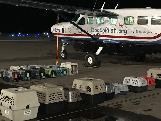 Animals from the Animal Services Center of the Mesilla Valley in July 2021 are ready to board plane to be on their way to out-of-state shelters in need of animals to adopt.