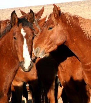 The U.S. Bureau of Land Management closed to the public its wild horse and burro corrals near Litchfield due to an outbreak of pigeon fever.