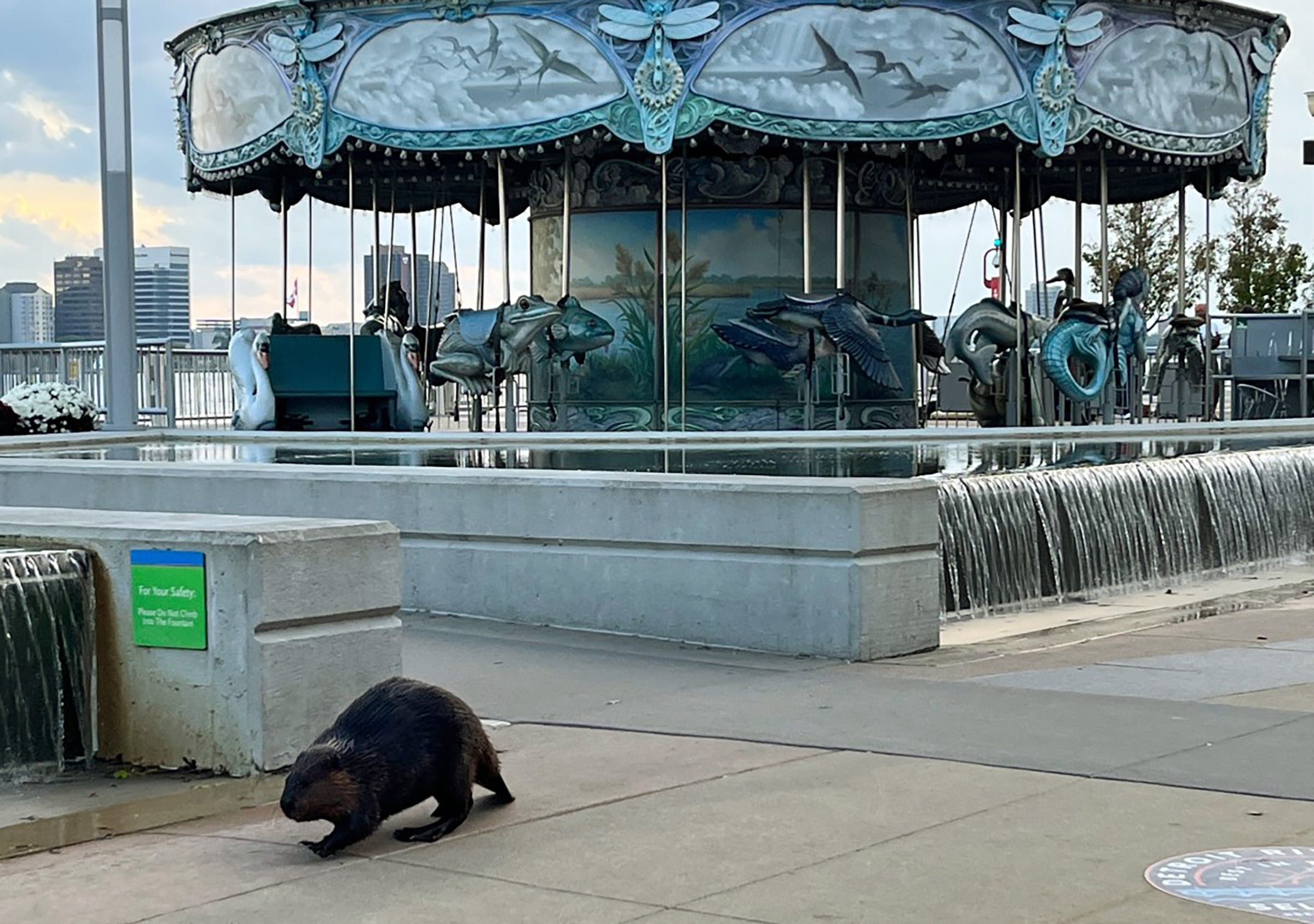 Beaver goes for a stroll along Detroit's RiverWalk