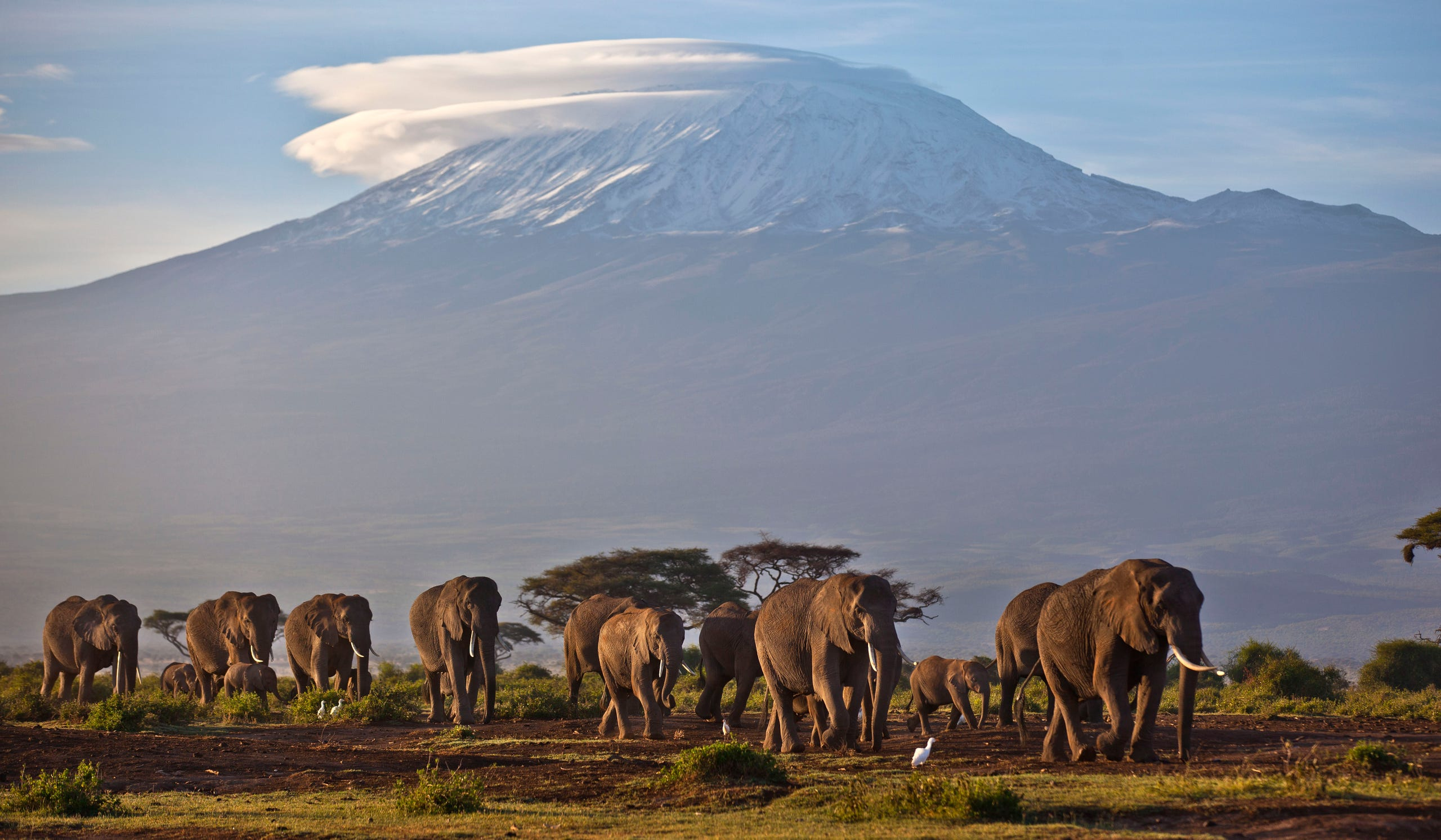 FILE - In this Monday, Dec. 17, 2012 file photo, A herd of adult and baby elephants walks in the dawn light in 2012 as the highest mountain in Africa, Mount Kilimanjaro in Tanzania, sits topped with snow in the background, seen from Amboseli National Park in southern Kenya. The glaciers on top of the mountain is one of three expecting to disappear in the next two decades.