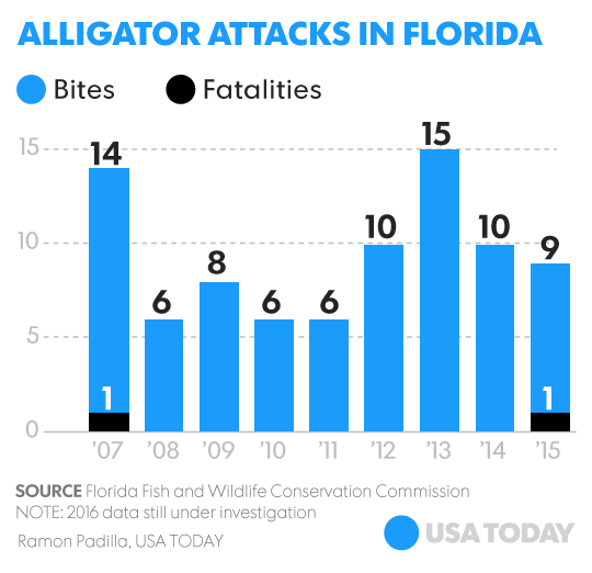 That Doesn T Mean There Haven T Been Small Bites And Major Injuries Caused By Alligators In 1977 There Were 13 Major Attacks In Florida And One Fatality