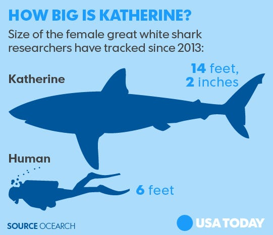 Scientists Have Been Tracking This Pound Great White For - Great white shark range us map